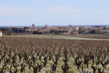 La ville entretient ses chemins de vignes